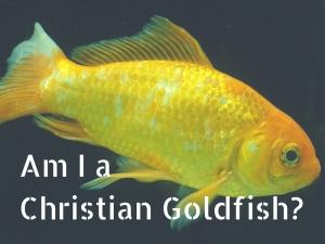 Am I a Christian Goldfish-