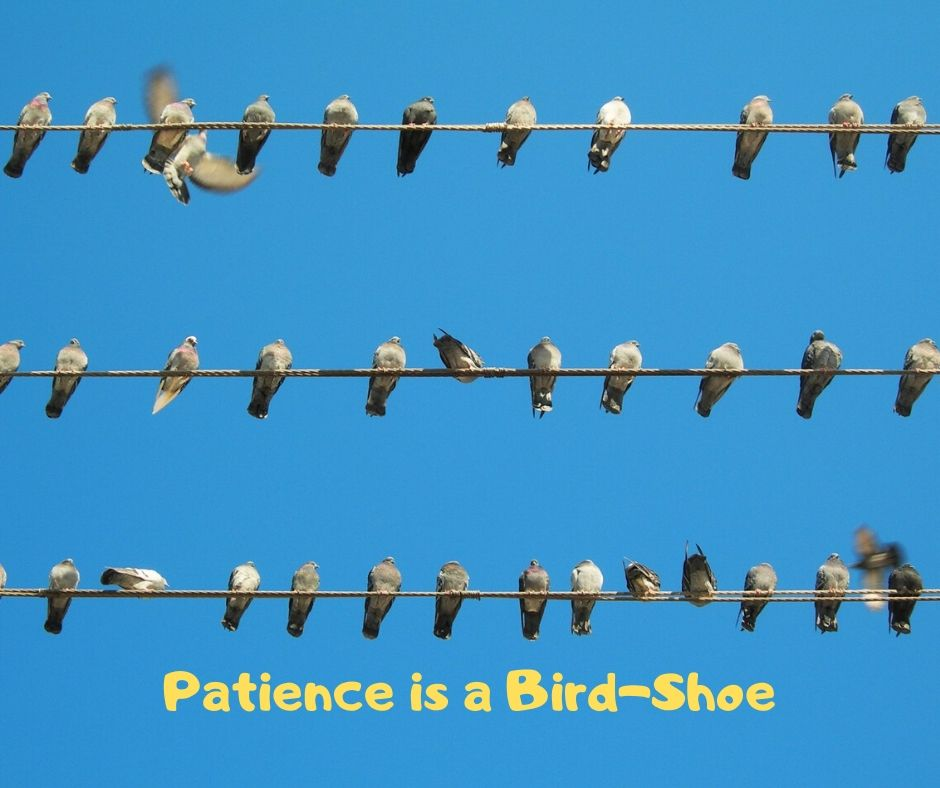 Patience is a Bird-Shoe